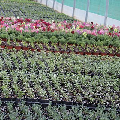 saint aunes plantes