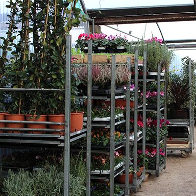 marché saint-aunes plants