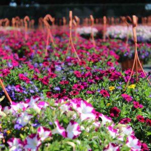 Suspensions/Pots fleuris