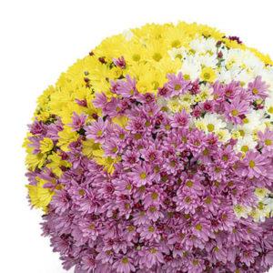 Multi-fleurs